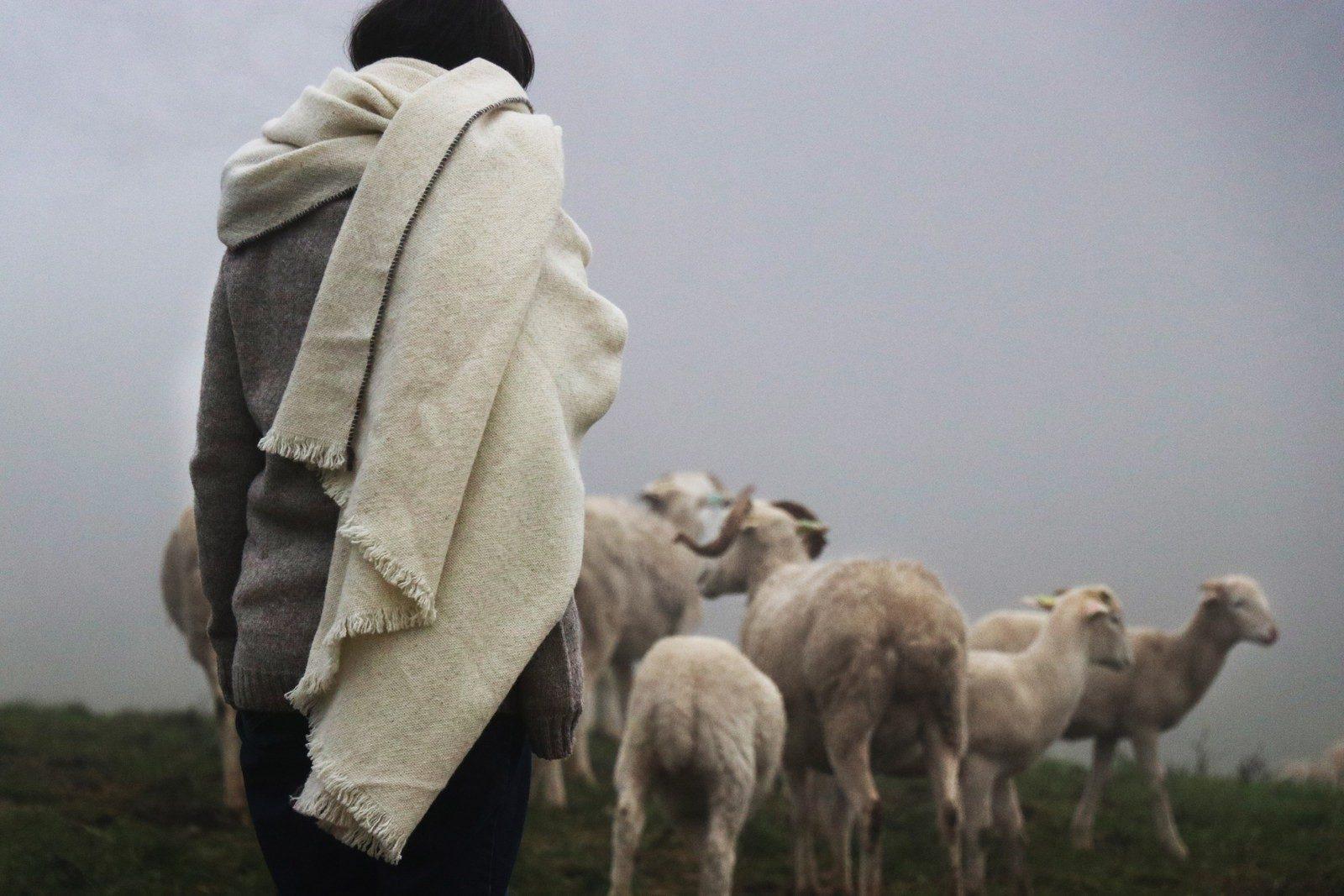 Laines paysannes - Bergère avec son troupeau avec un pull et un plaid